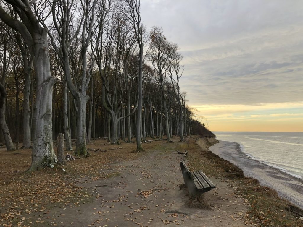 Gespensterwald Nienhagen Ostsee Steilküste