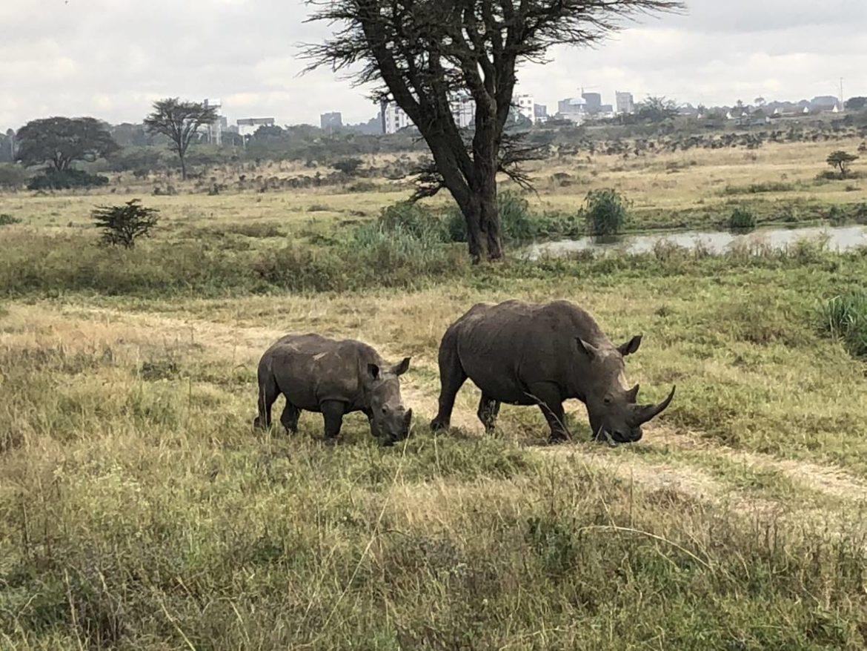 Nashörner im Nairobi National Park in Kenia