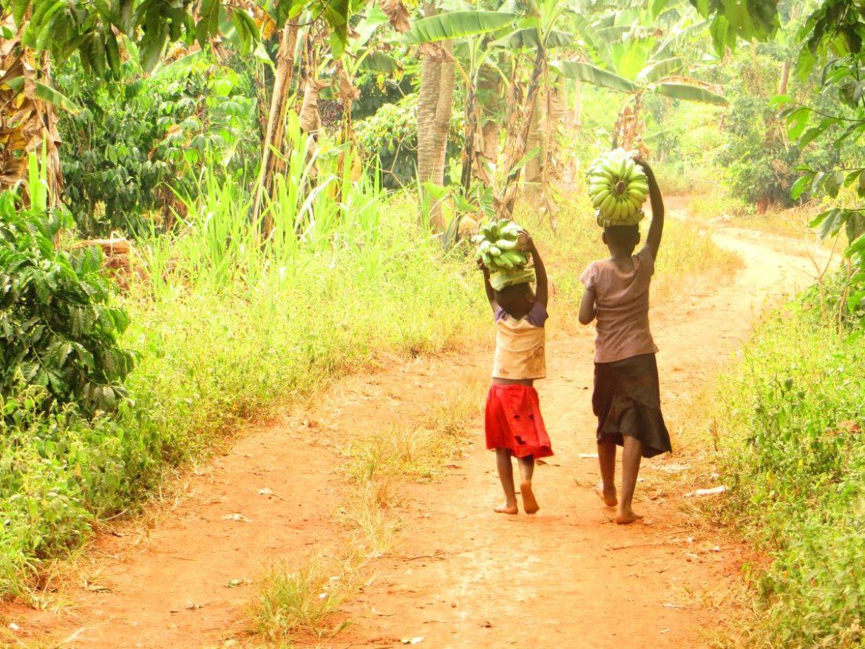 Uganda Ostafrika Kinder tragen Bananen